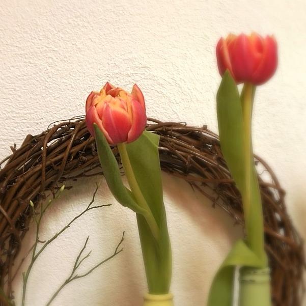 Tulpe mit Kranz