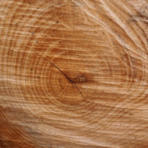 Ringe im Holz