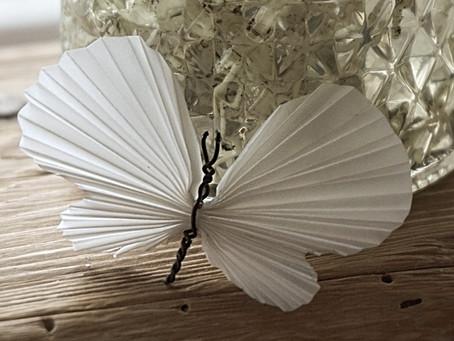 Zarte Schmetterlinge