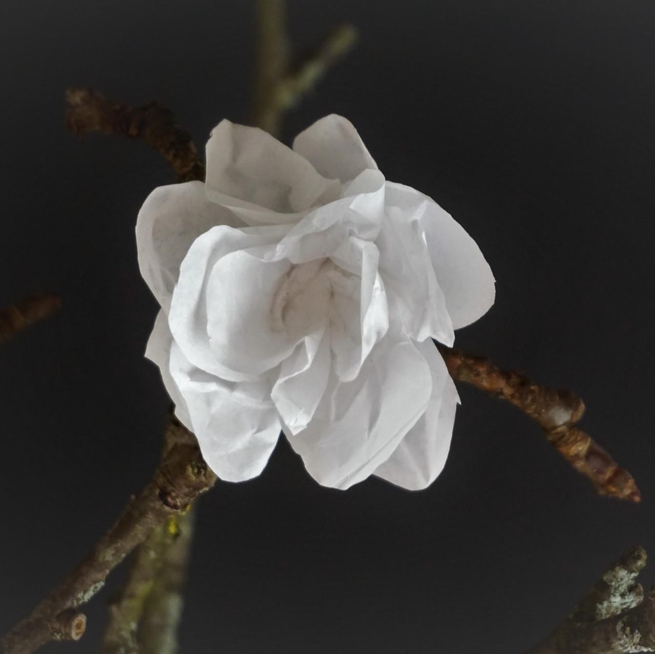 Papierblüte