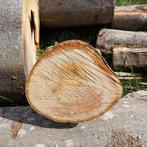 Holzstamm mit Jahresringen