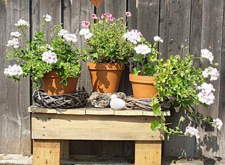 Kleine Blumenbank