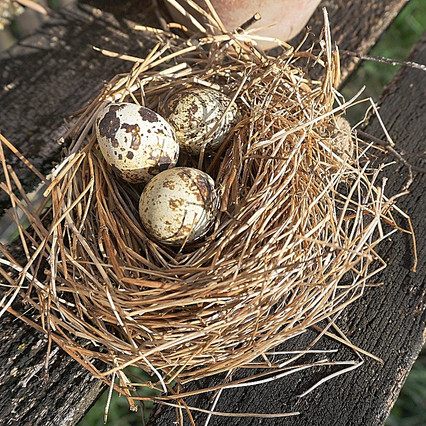 Nest aus getrocknetem Gras