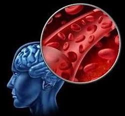Global-Blood-Brain-Barrier-Transport-Dru