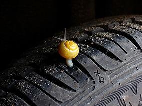 snail-505511_960_720.jpg