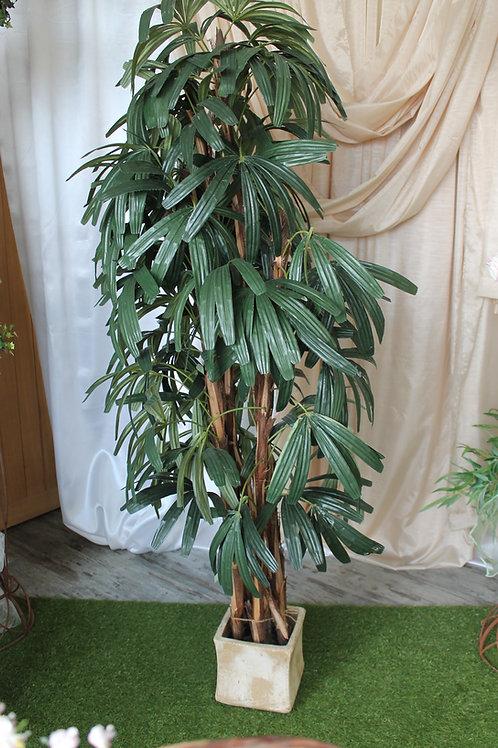 LOC004 - Raphis Palm 1.80m