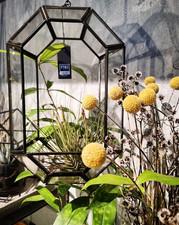 Have a nice weekend 💛__#trockenblumen #