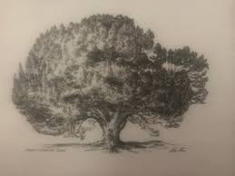 Get To Know Your Baywood Heritage Tree