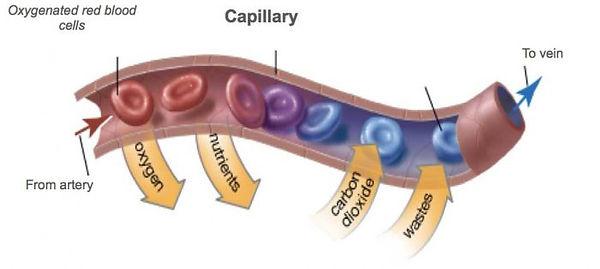 Capilary_Extracted-700x314.jpg