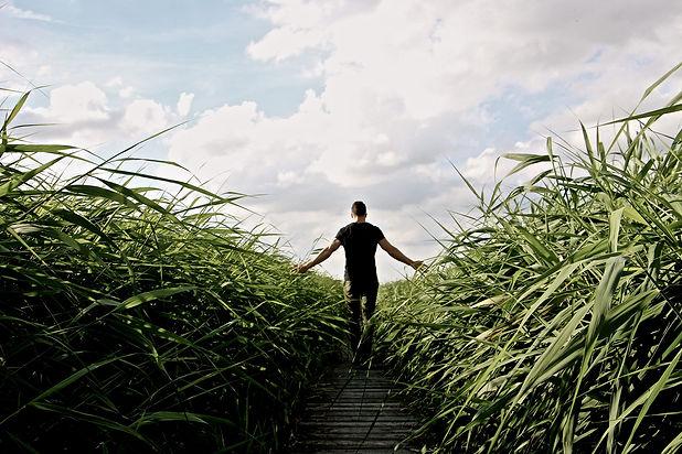 high-grass-1504284_1920.jpg