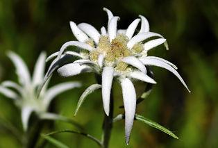 flower-2399639_1920.jpg