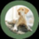 doggydaycare640.png