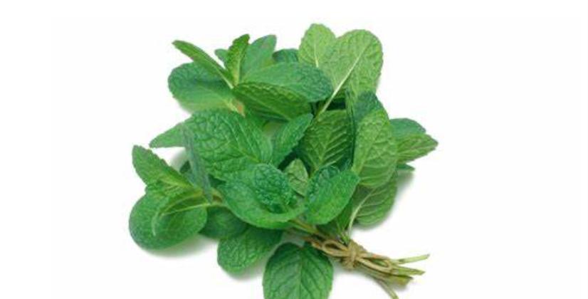 Mint Leaves | পুদিনা পাতা