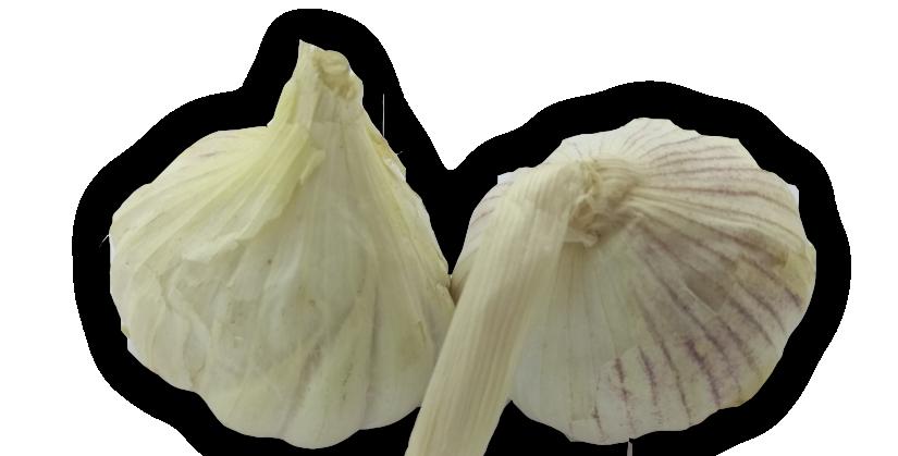 Garlic   রসুন