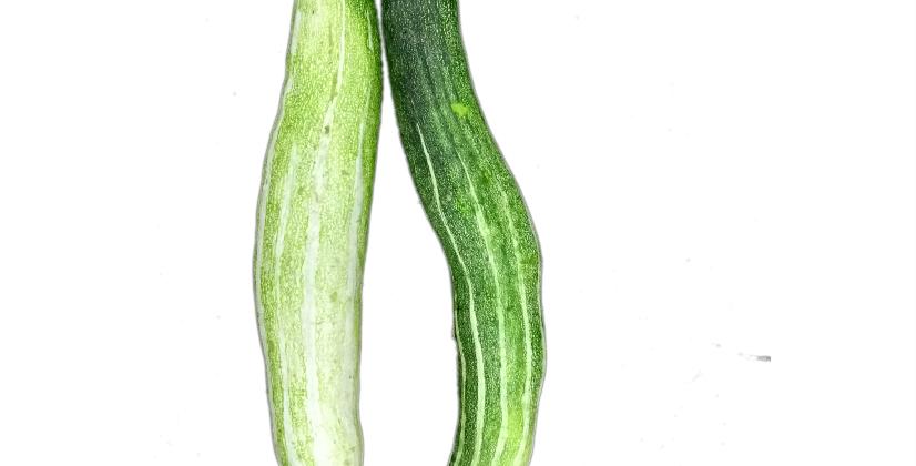 Snake Gourd | চিচিঙ্গা
