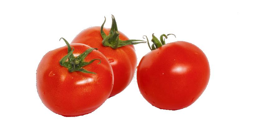 Tomato | টমেটো