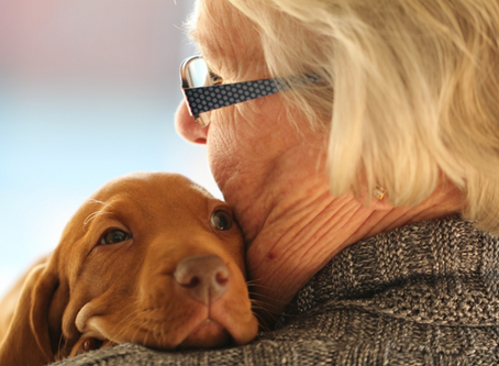 Estate Planning Tips for Ensuring Your Pets Are Properly Cared For