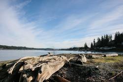 Fox Island Large Driftwood
