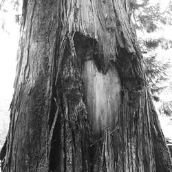 Olympia Tree Love