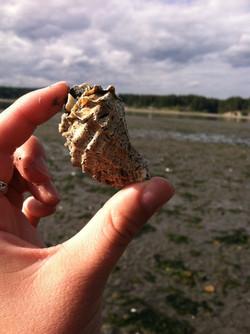 Fox Island Beach Shell