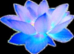 flower.prop2-trans.png