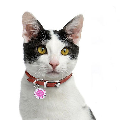Cat Collars Harness