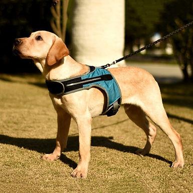 Dog Harness New K-Shaped Luminous LED Harness for  Dog