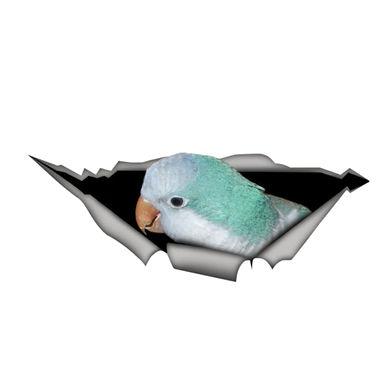 Blue Quaker Parrot Torn Vinyl Car Window Waterproof cm