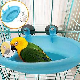 Bird Bath Time