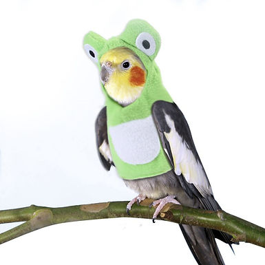 Froggy Suit For Small Parrots & Other Birds   Multiple Sizes Available