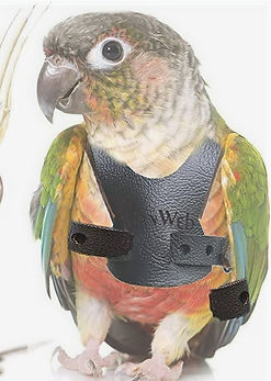 Bird Harness Leash