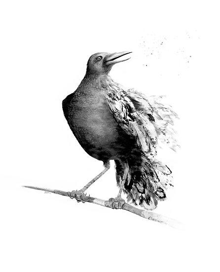 Raven Runes Signed Print