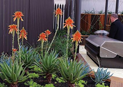"Sunbird Aloes ""Gemini"""