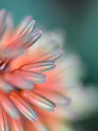 Blur of colour