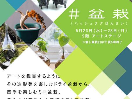 """""""#盆栽""""阪急百貨店梅田店でのイベントのお知らせ"""