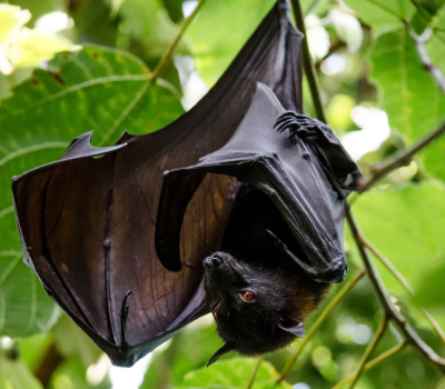 A bat is hanging from a tree branch on a background of green leaves