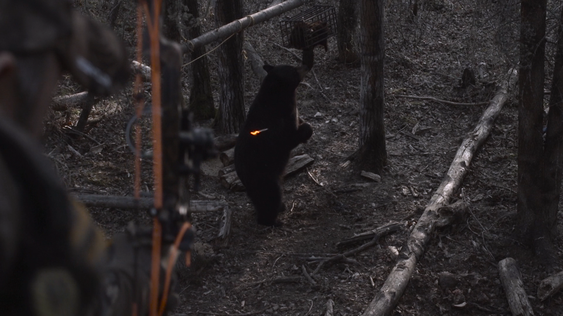 BBIL bear