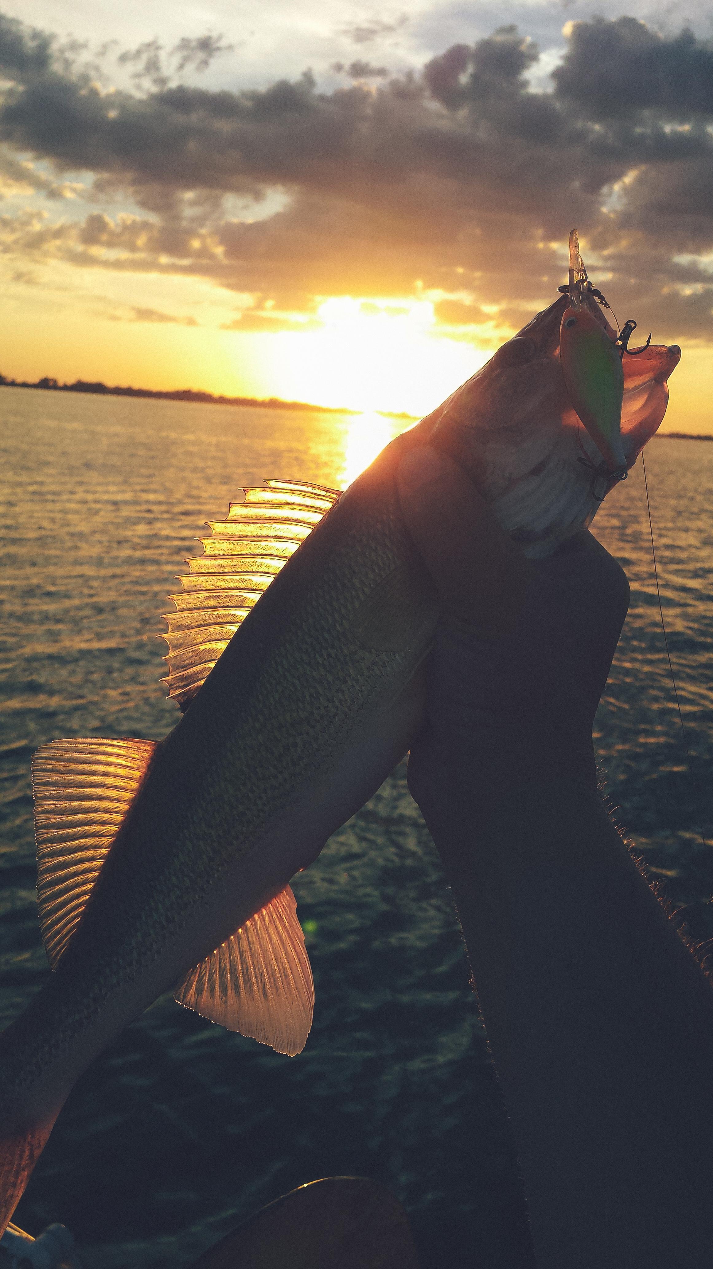 SoDak Walleye at Sunset