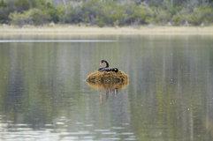 Black Swan_06.jpg