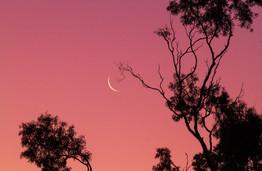 Crescent Moon in Pink.jpg