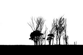 Treeline Silhouette.jpg