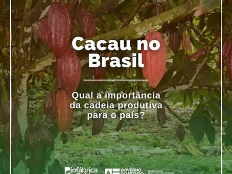 Cacau no Brasil