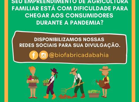 A Biofábrica da Bahia disponibiliza suas redes sociais para ajudar a Agricultura Familiar.