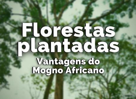 Florestas Plantadas - Vangatens do Mogno Africano