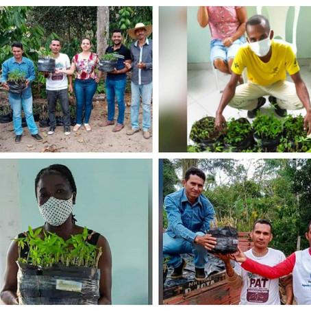 Biofábrica, SDR e PAT revolucionam mandiocultura no Extremo-Sul da Bahia