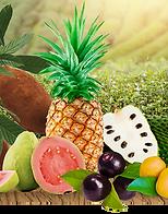 Fruteiras2.png