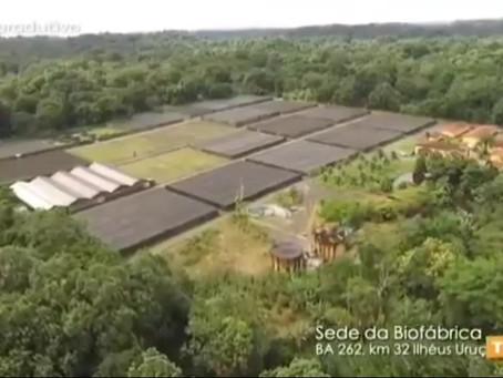 Biofábrica da Bahia na TVE
