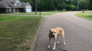 Sometimes the best way to learn the neighborhood is simply walking it with your companion.