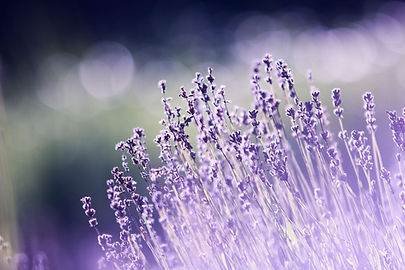 aromatherapy-beautiful-blooming-blur-286