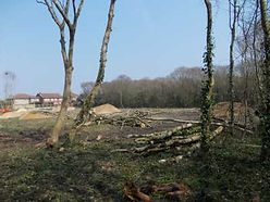 Arboricultural Works